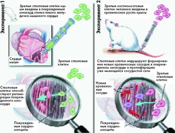 Прививка от гепатита ростов-на-дону